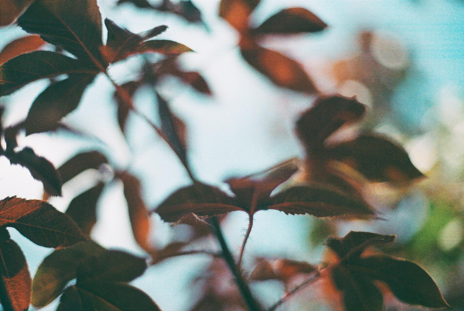 Fondos de pantalla : luz de sol, naturaleza, fotografía, rama ...