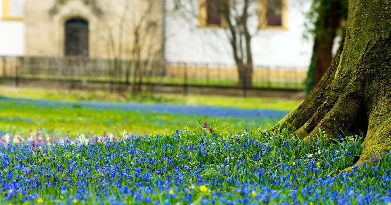 Sfondi luce del sole paesaggio verde primavera for Immagini desktop primavera