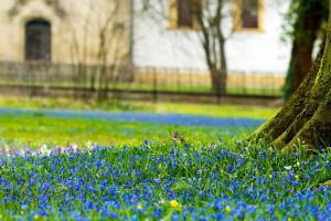 Sfondi primavera hd
