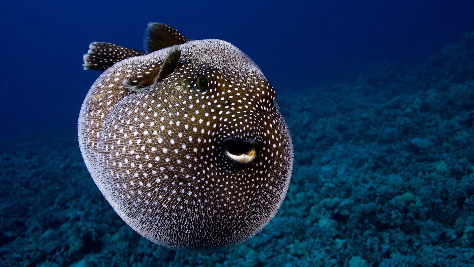 название и фото самых красивых морских животных говорит сама писательница