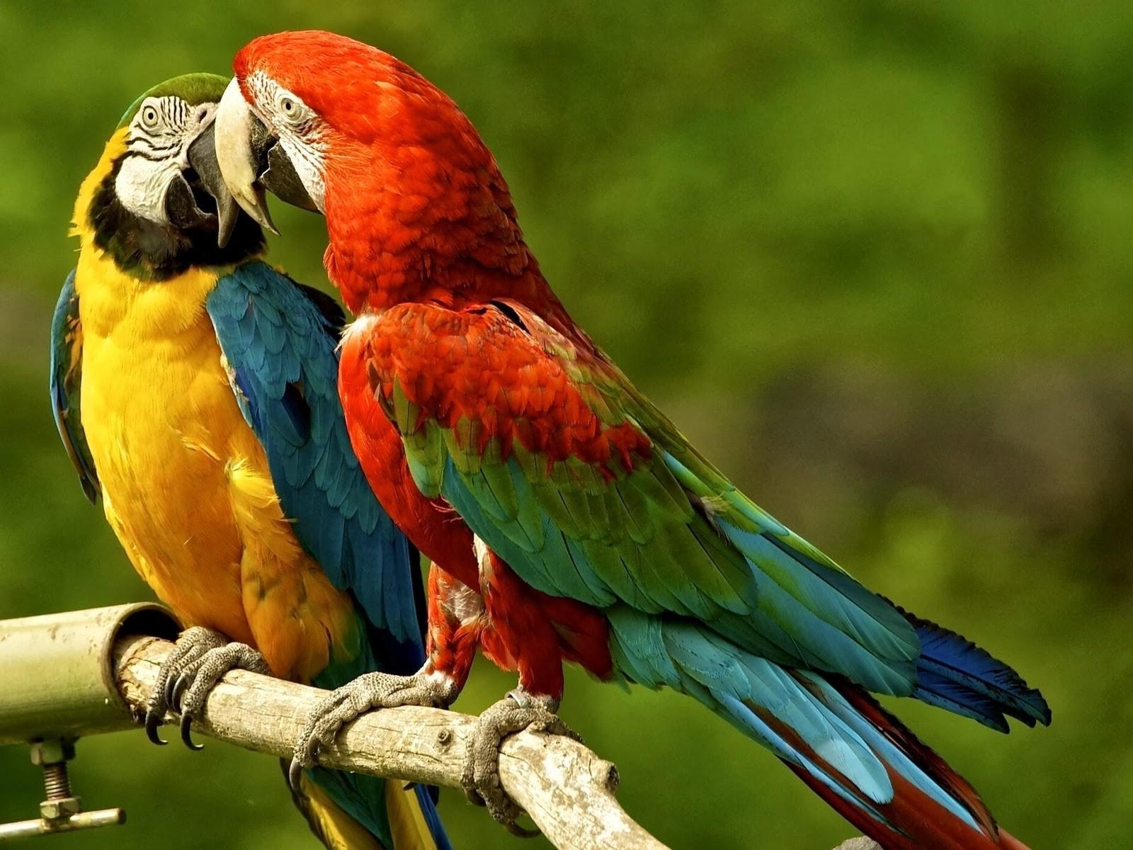 что фото птицы попугая яичка