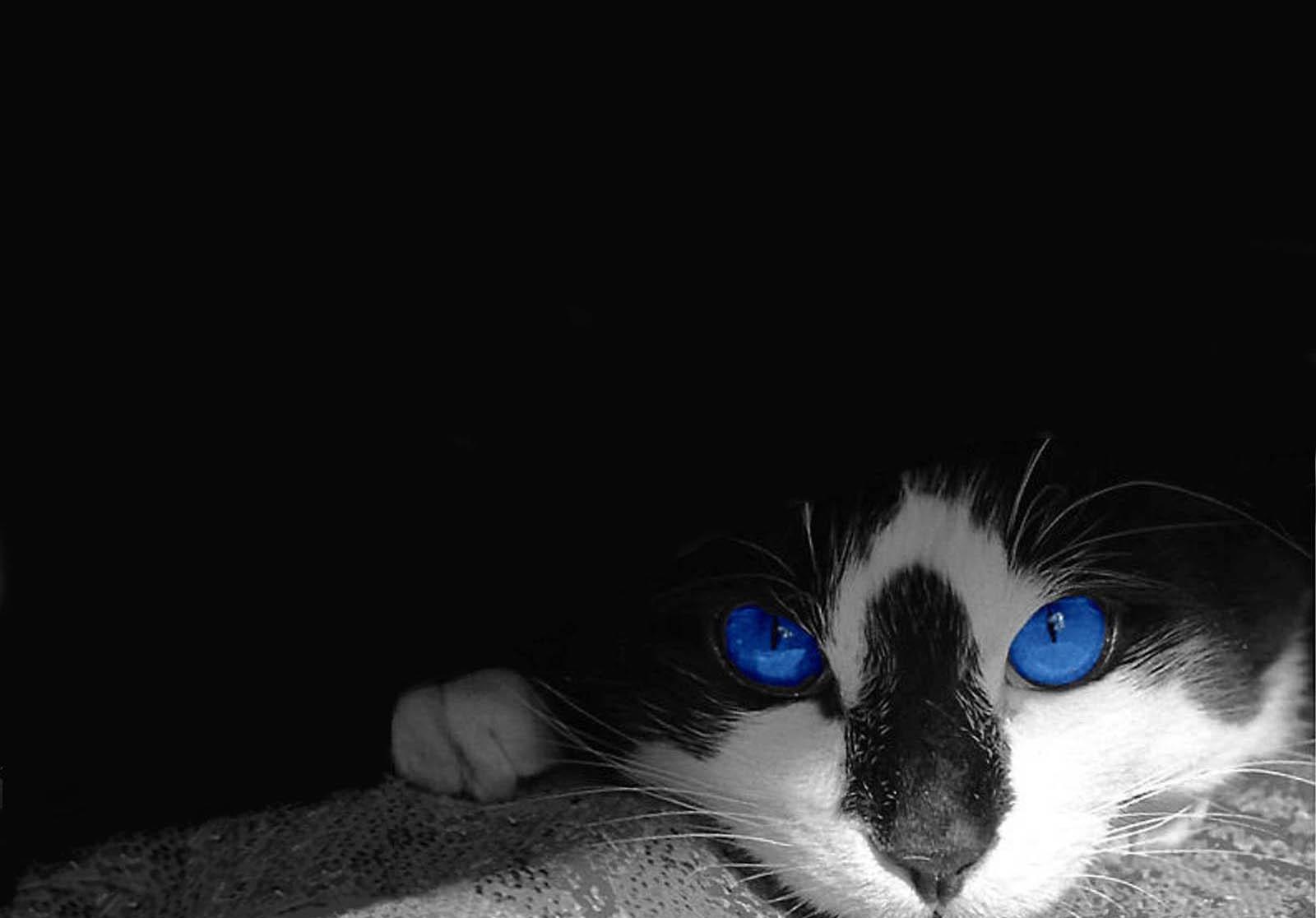 Sfondi bianca fotografia gattini barba gatto nero for Gatti sfondi desktop gratis