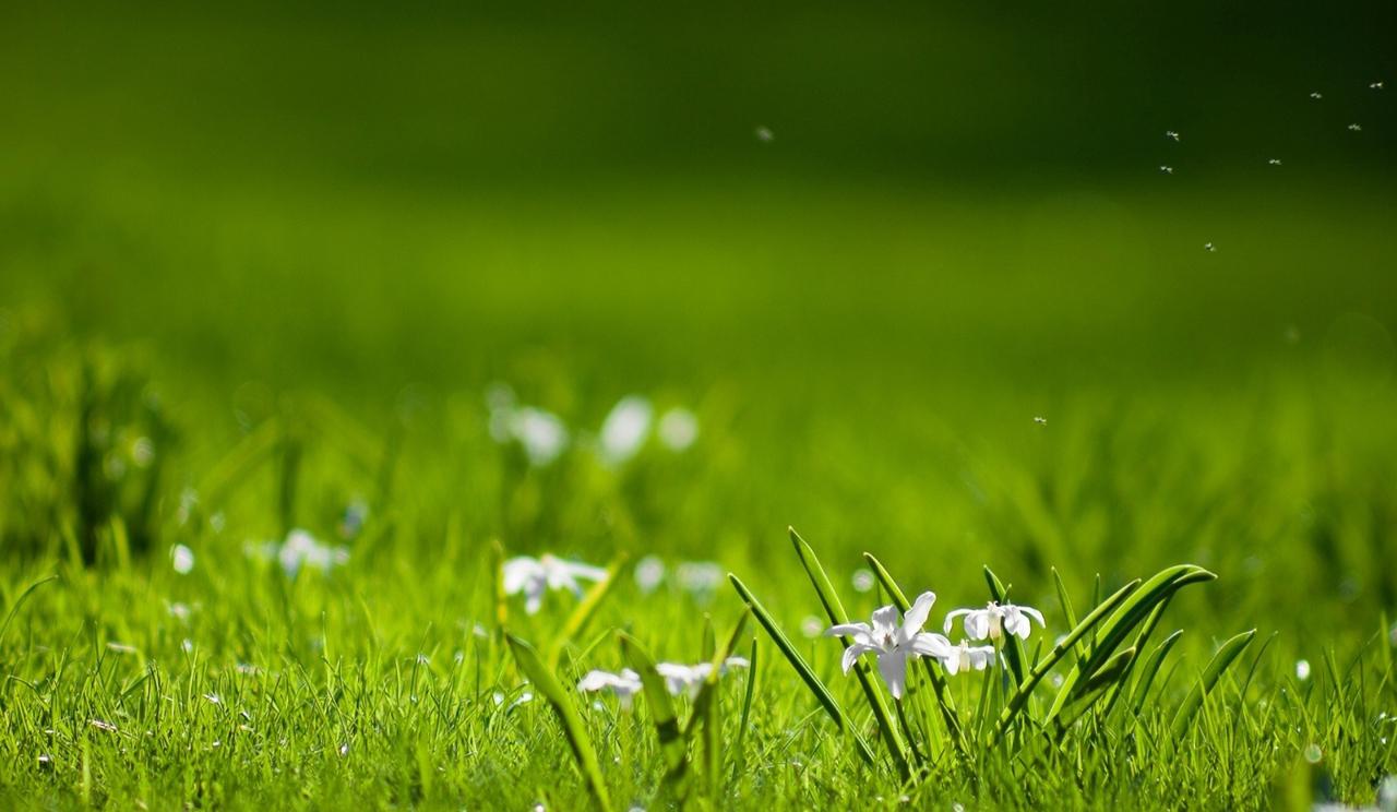 Sfondi Acqua Verde Primavera Fiore Vista Prateria Pianta