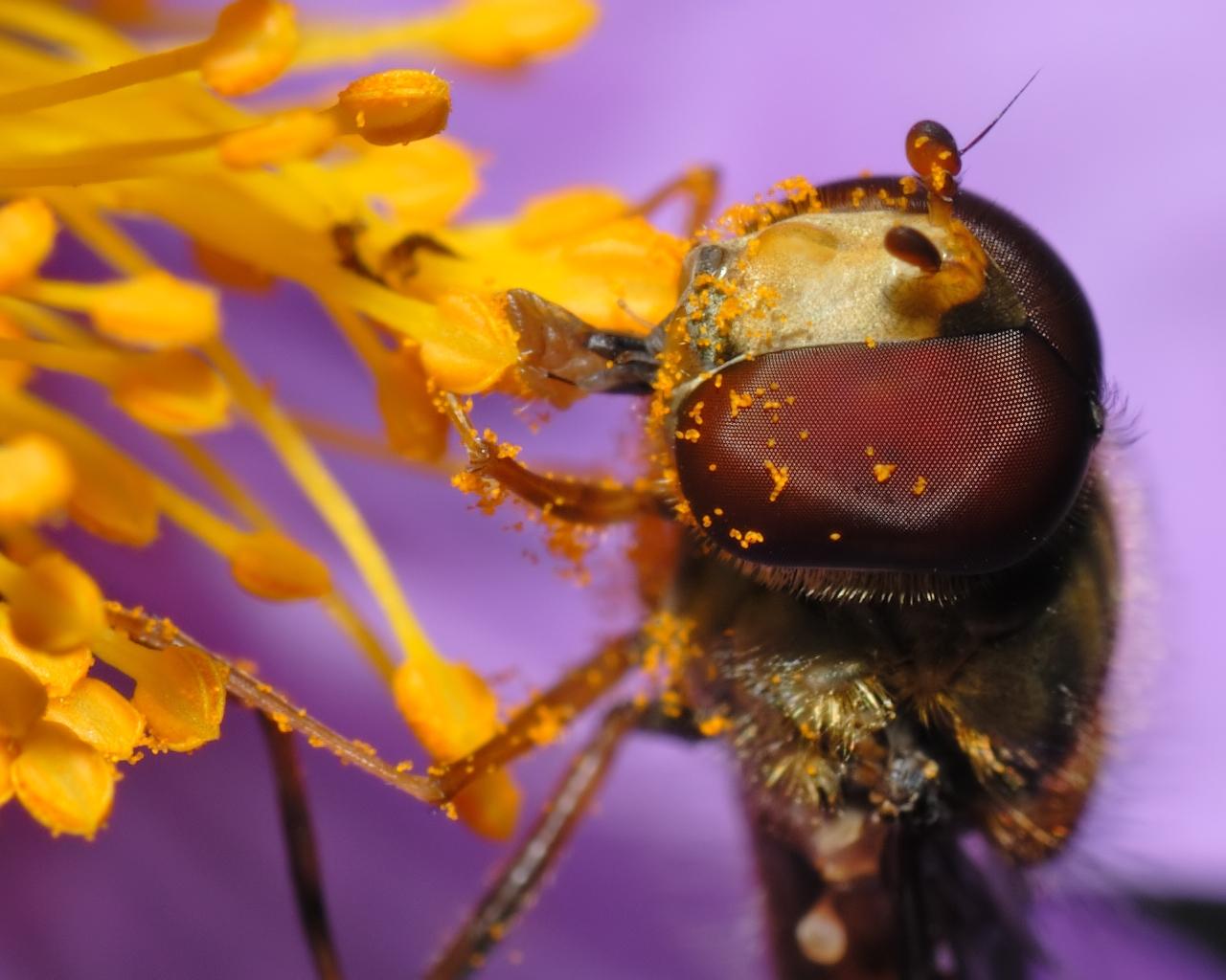 школе картинка как пчела опыляет цветок отлично сочетается