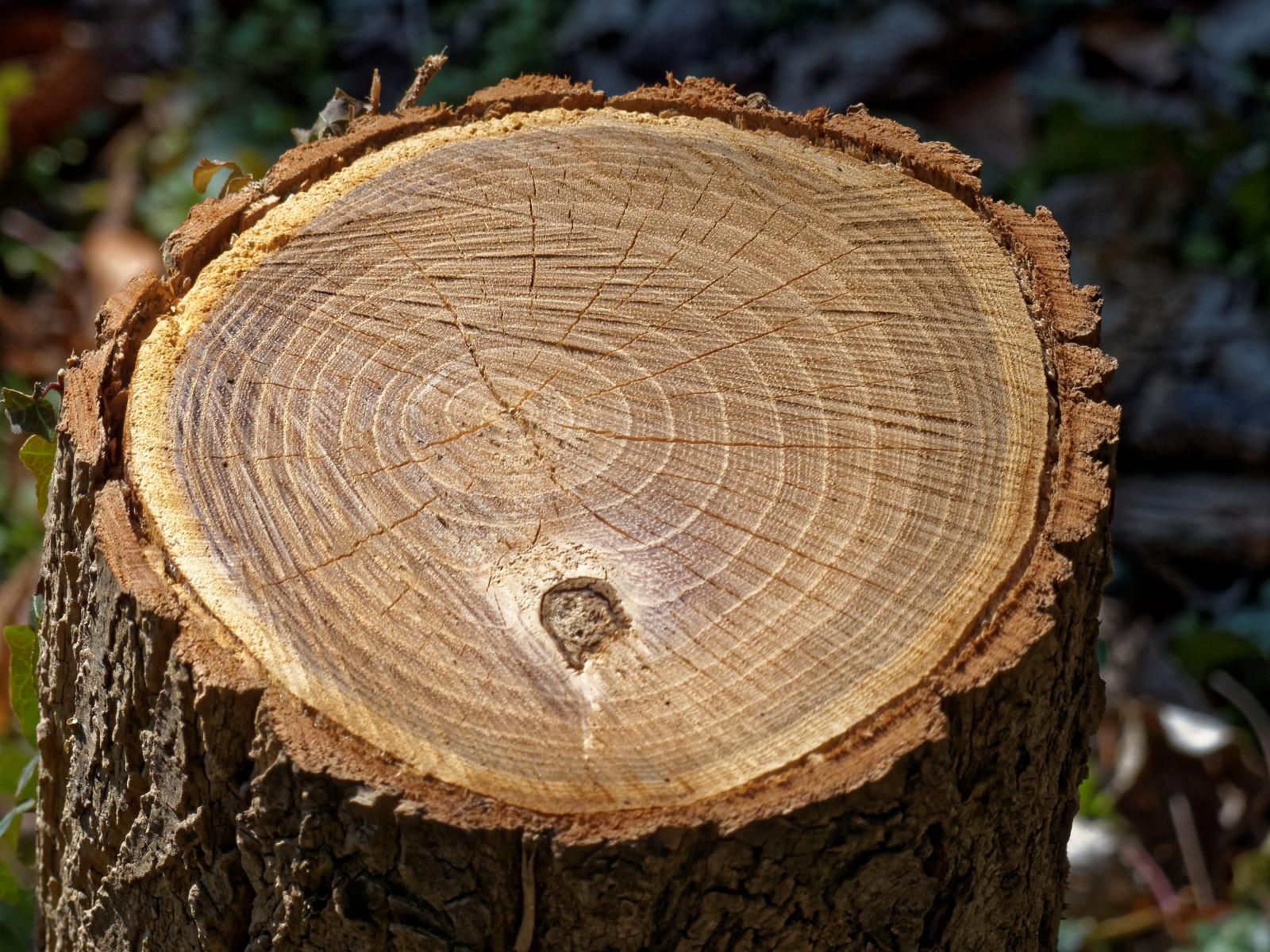 Fond d 39 cran souche d 39 arbre la nature bois hdr cercle l 39 europe la belgique coup - Champignon sur tronc d arbre ...
