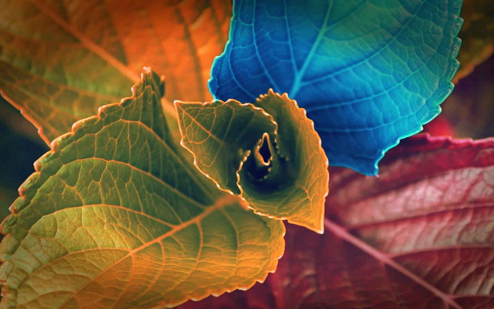 hintergrundbilder sonnenlicht bunt bl tter natur pflanzen fotografie makro insekt gr n. Black Bedroom Furniture Sets. Home Design Ideas