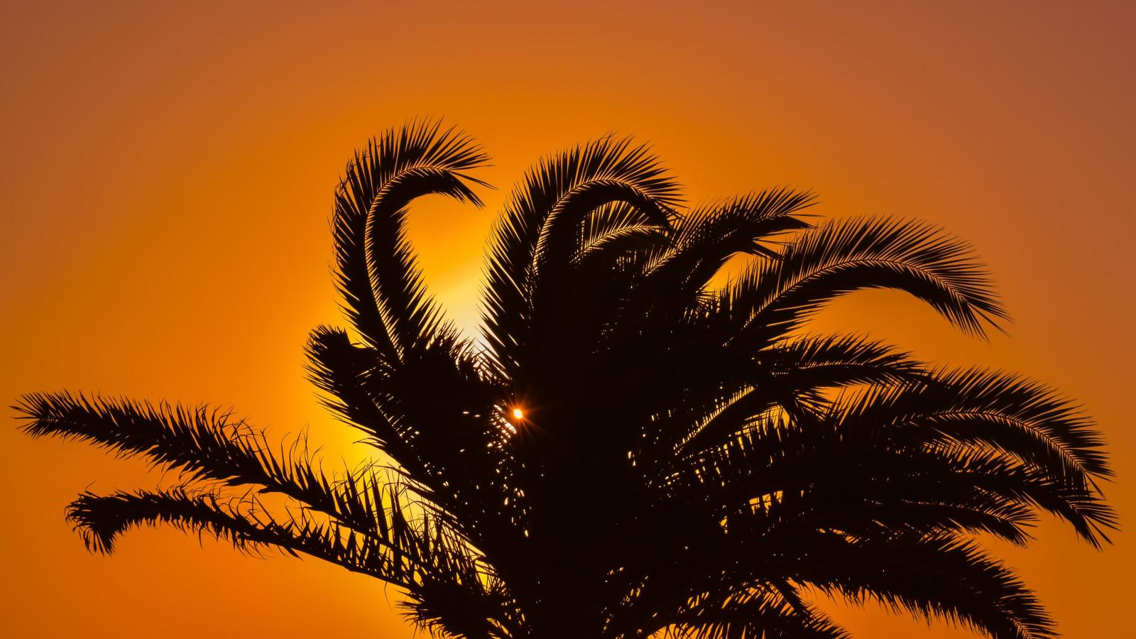 профессиональное фото море солнце ветка пальмы новости