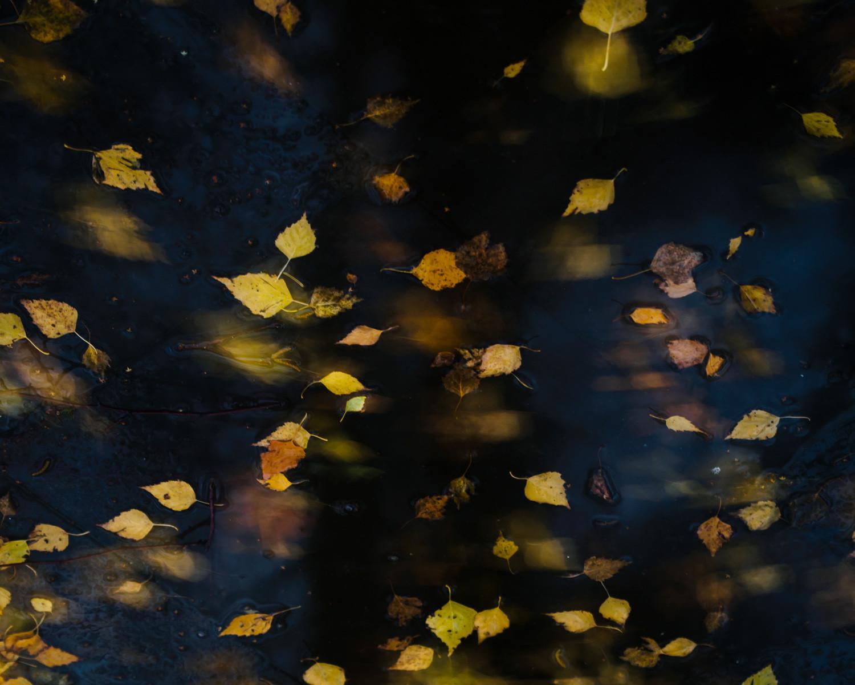 3d падающие листья на ноутбук