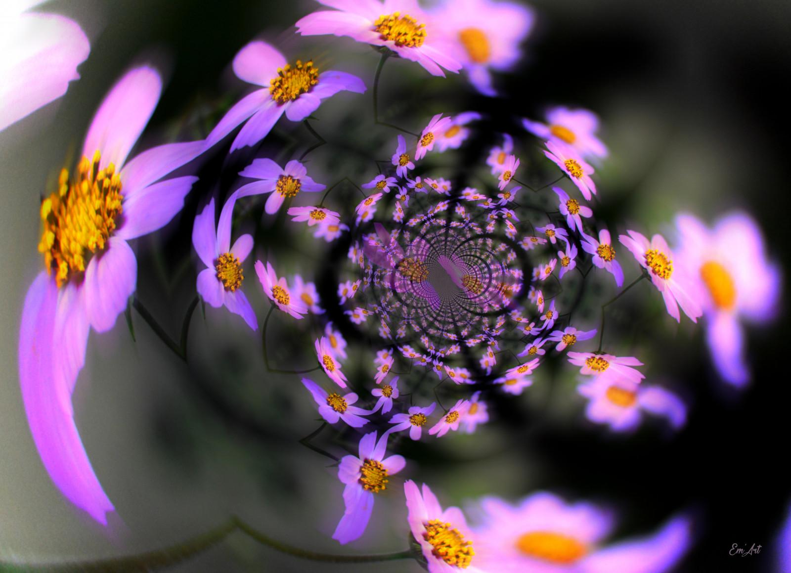hintergrundbilder abstrakt natur liebe fotografie kunstwerk lila gelb fraktal rose. Black Bedroom Furniture Sets. Home Design Ideas