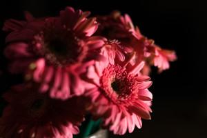 Unduh 770+ Wallpaper Bunga Dalam Vas Paling Keren