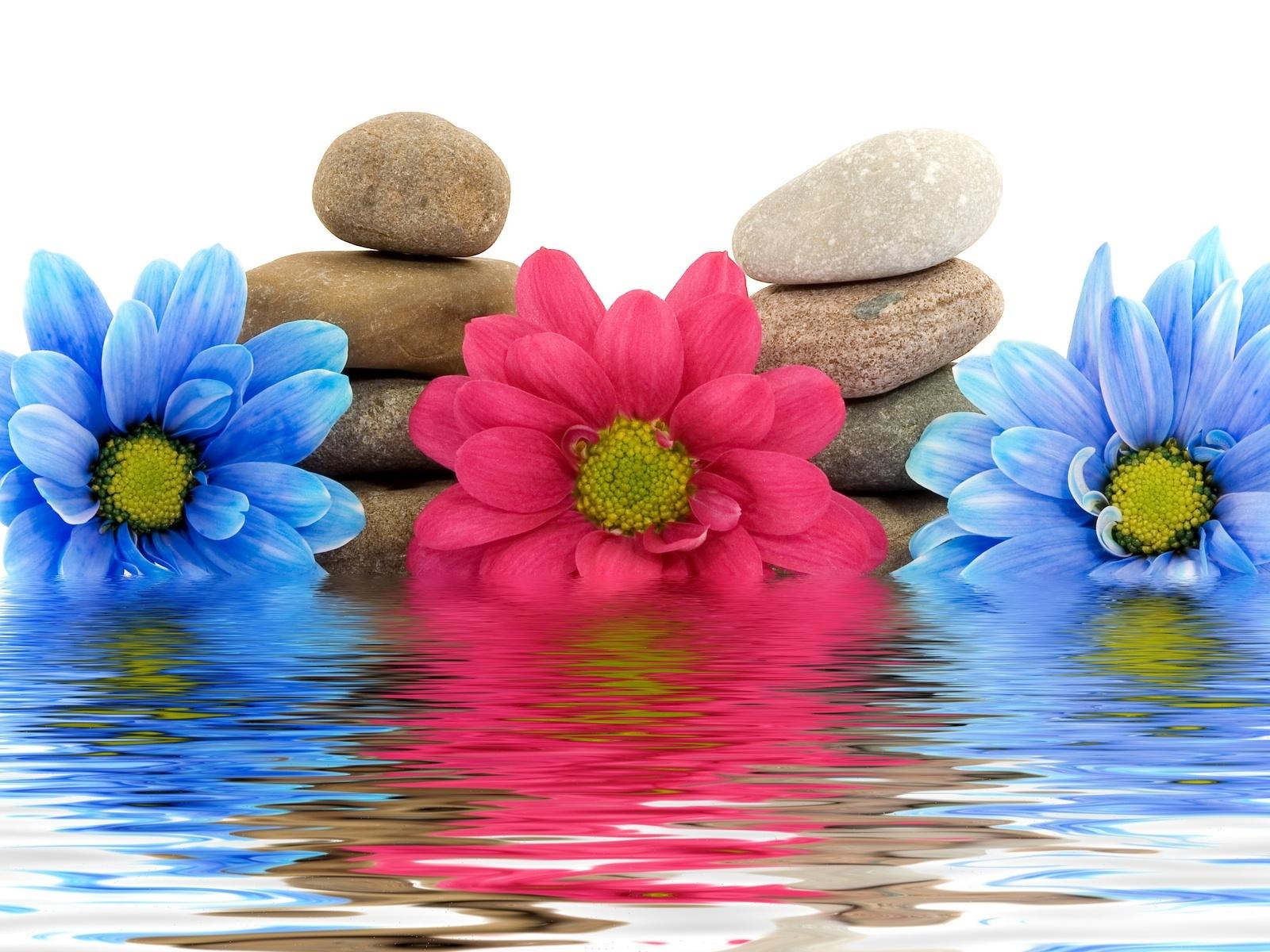 обои на раб стол цветы вода № 635546 загрузить