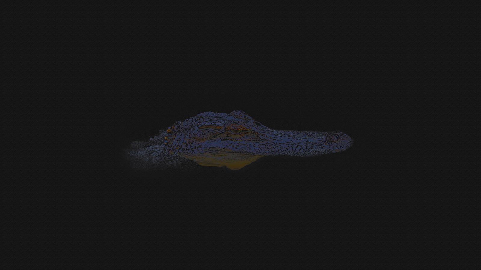 Wallpaper Black Background Reflection Blue Crocodiles