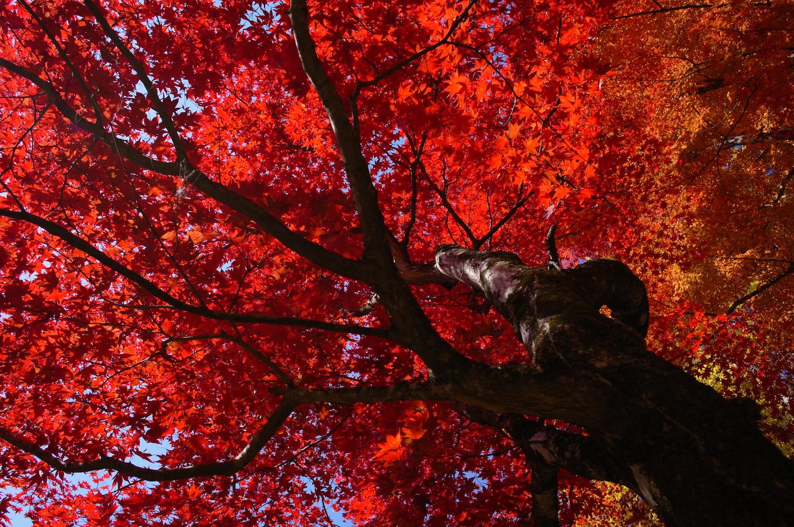 Fondos de pantalla : luz de sol, rojo, rama, Toyota, flor, temporada ...