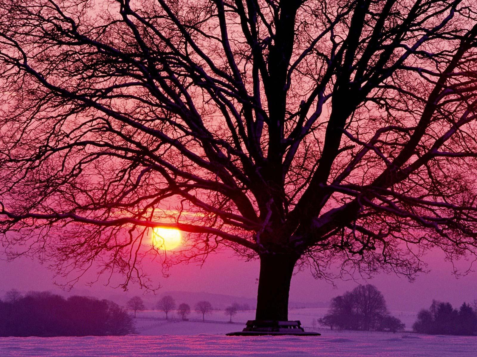 Imagini pentru ramuri soare