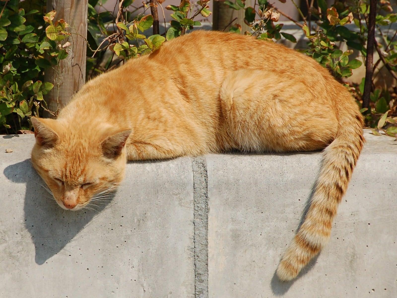 Картинки лежащий кот