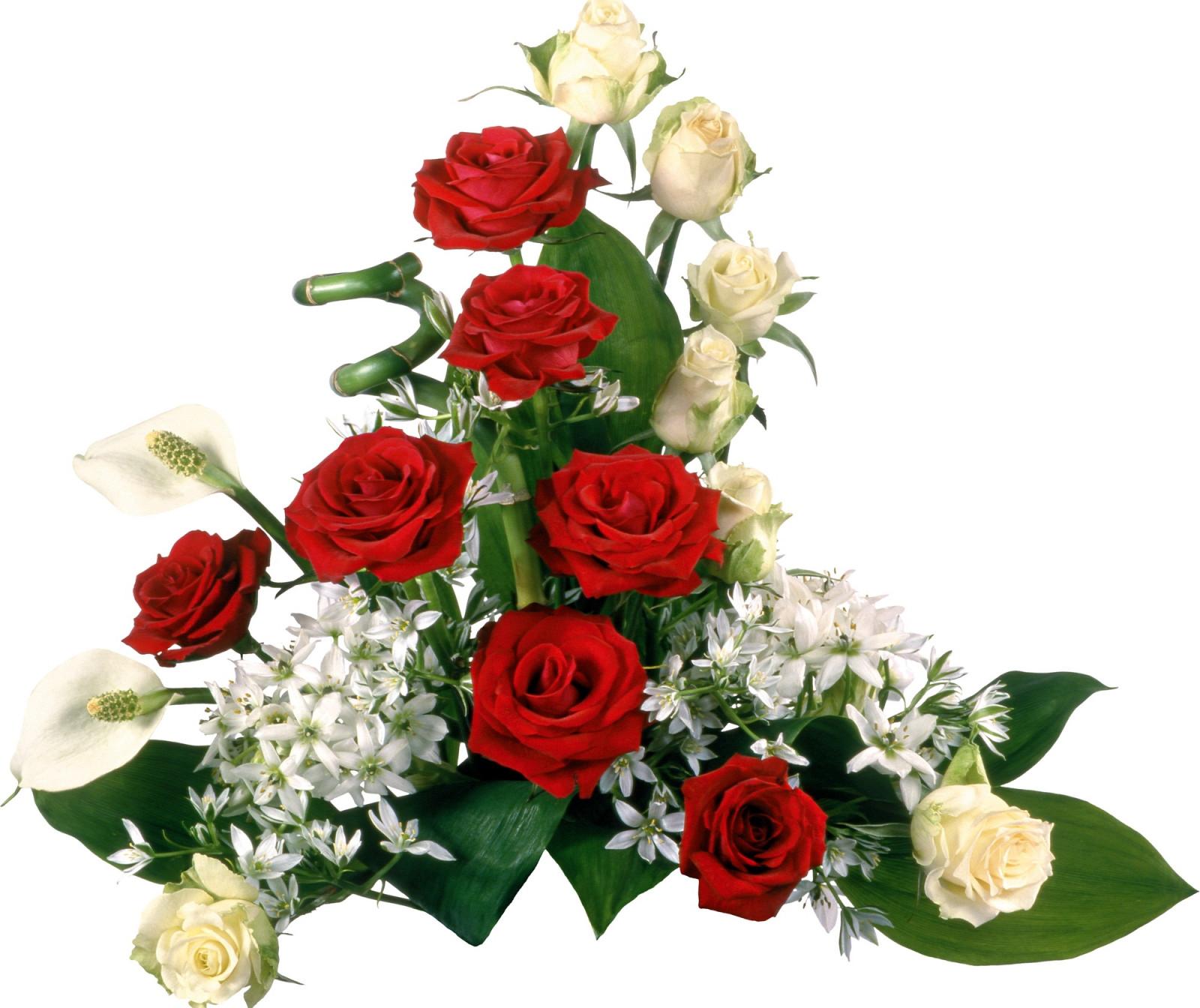 Красивые цветы фото для поздравления, создания открыток
