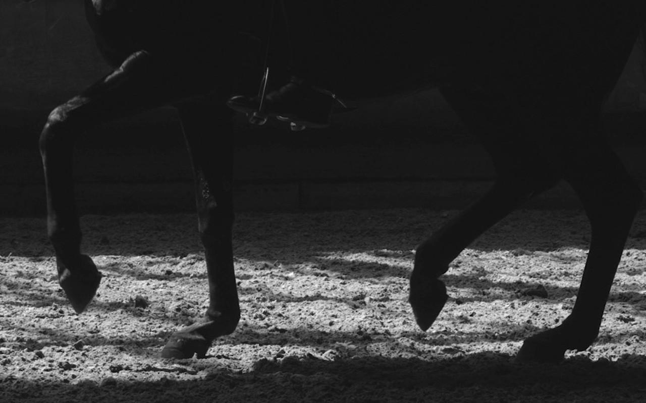fond d 39 cran monochrome cheval ombre quitation lumi re obscurit noir et blanc. Black Bedroom Furniture Sets. Home Design Ideas