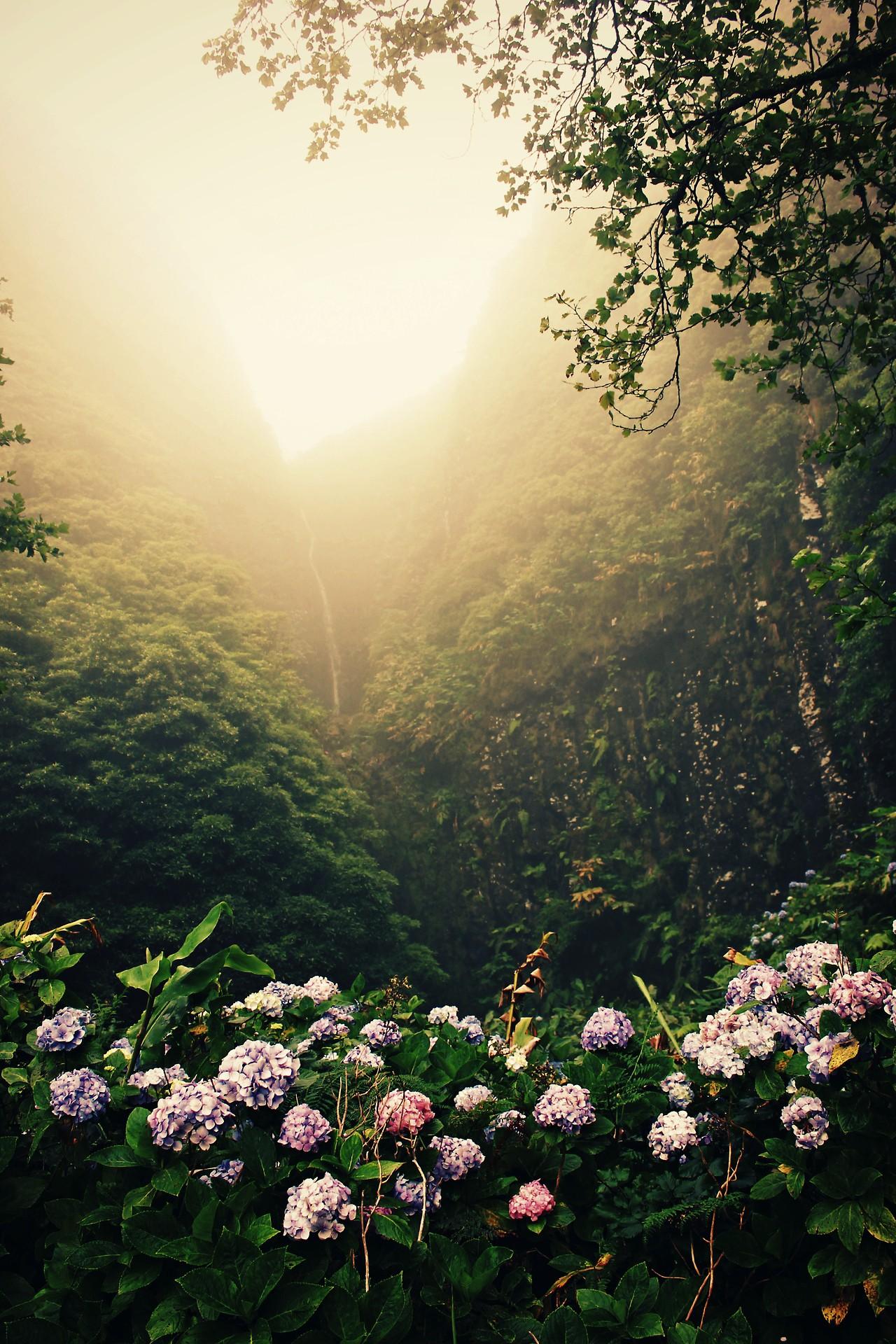 Sfondi Luce Del Sole Paesaggio Foresta Natura Visualizzazione