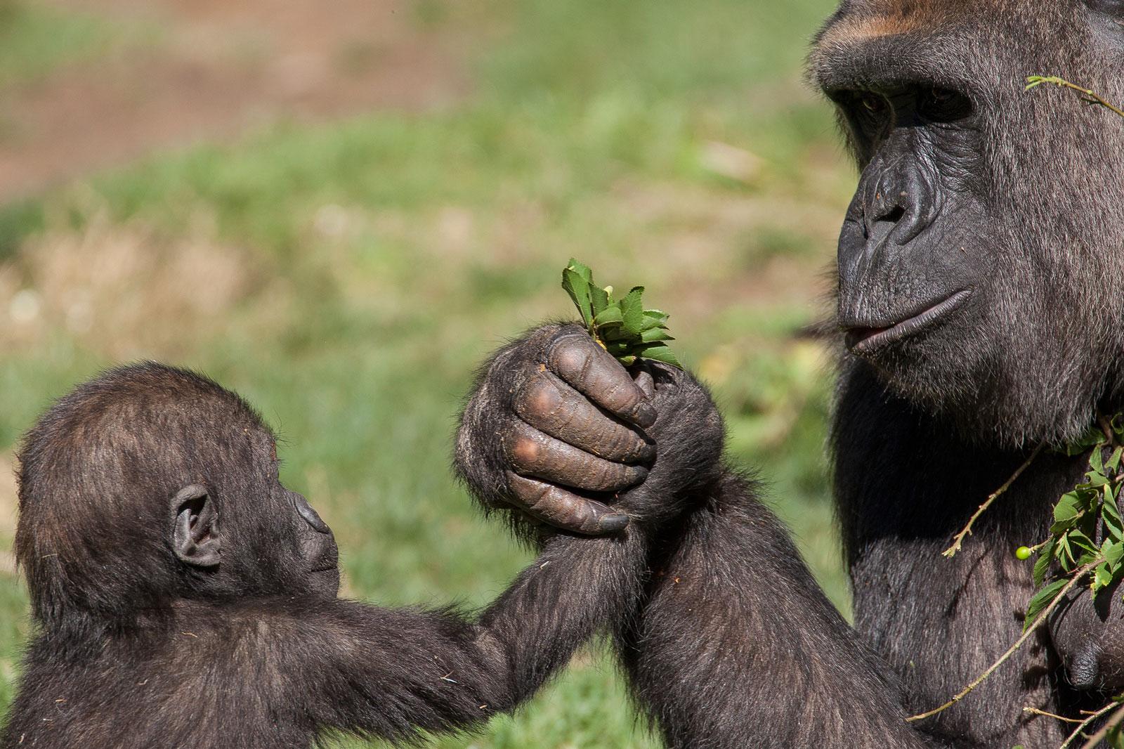 """Résultat de recherche d'images pour """"gorille fleur"""""""