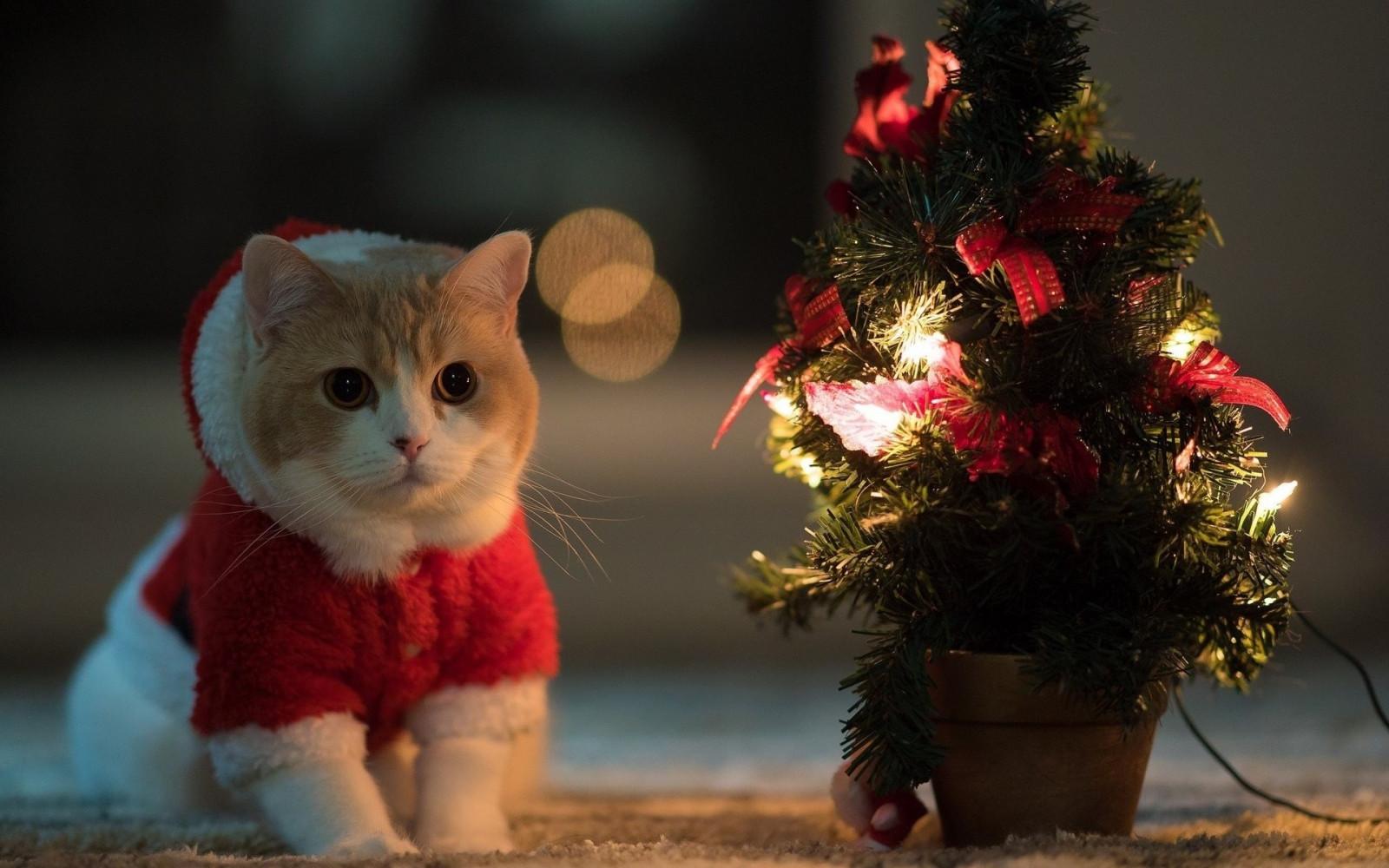 hintergrundbilder katze tiere rot weihnachtsbaum weihnachten urlaub sankt kost m baum. Black Bedroom Furniture Sets. Home Design Ideas