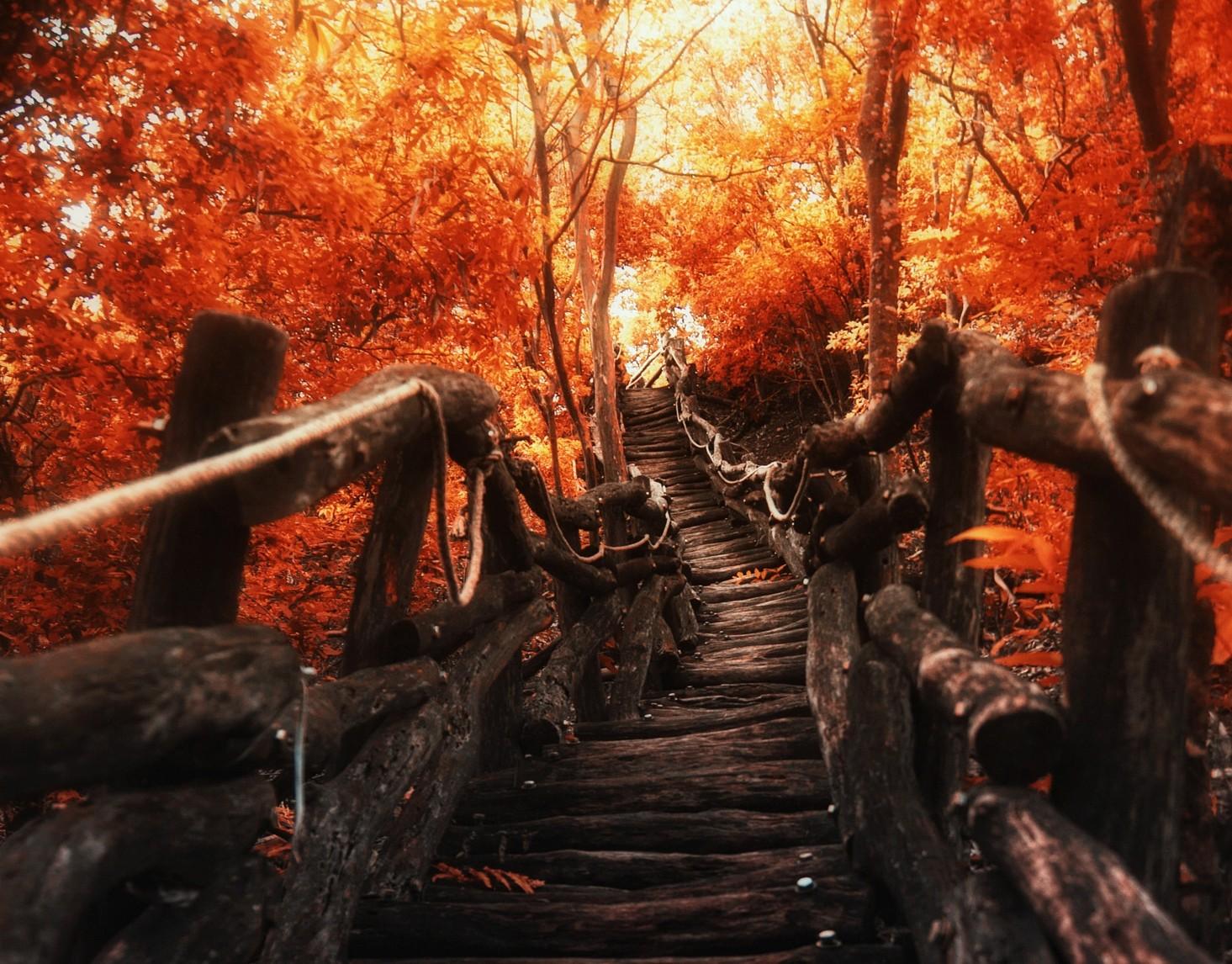 Ánh sáng mặt trời cây phong cảnh rừng ngã thiên nhiên Đỏ con đường Đi bộ