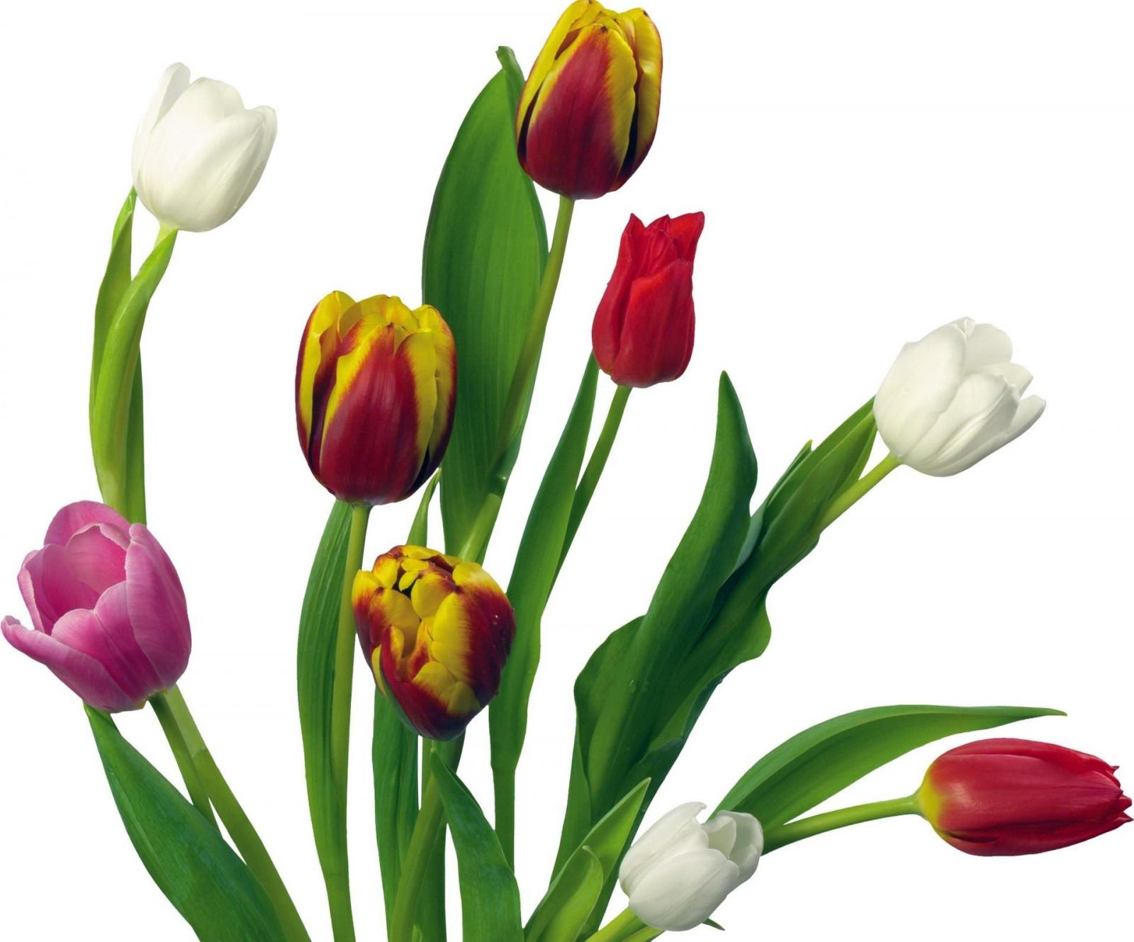 Юбилеем, картинки букет весенних цветов на прозрачном фоне