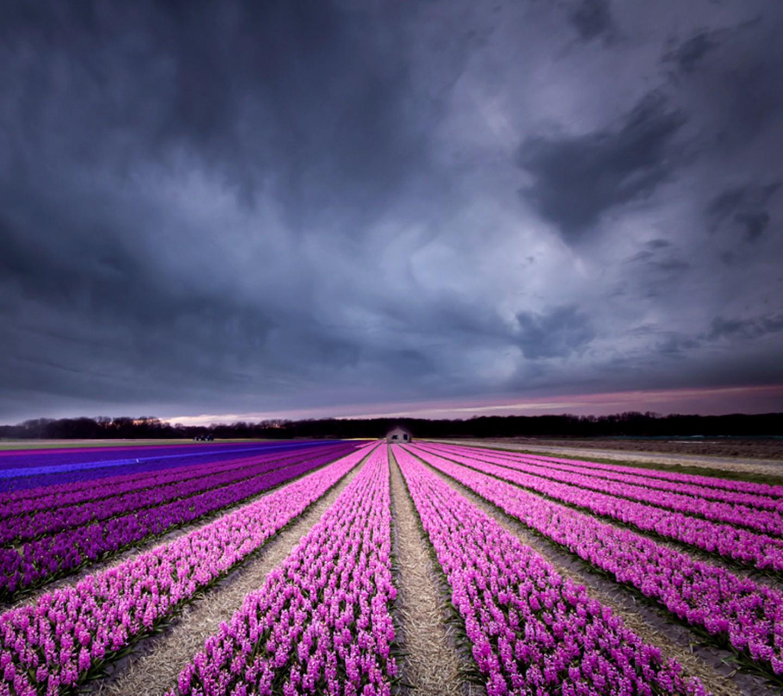 Fondos de pantalla abstracto naturaleza cielo campo - Lavanda clima ...