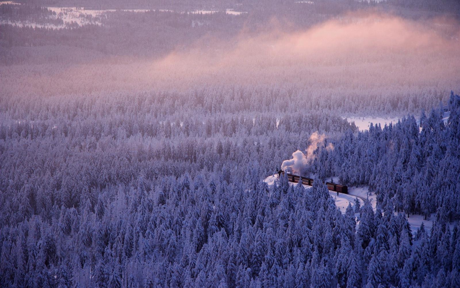 Fondos de pantalla rboles paisaje bosque naturaleza - Lavanda clima ...