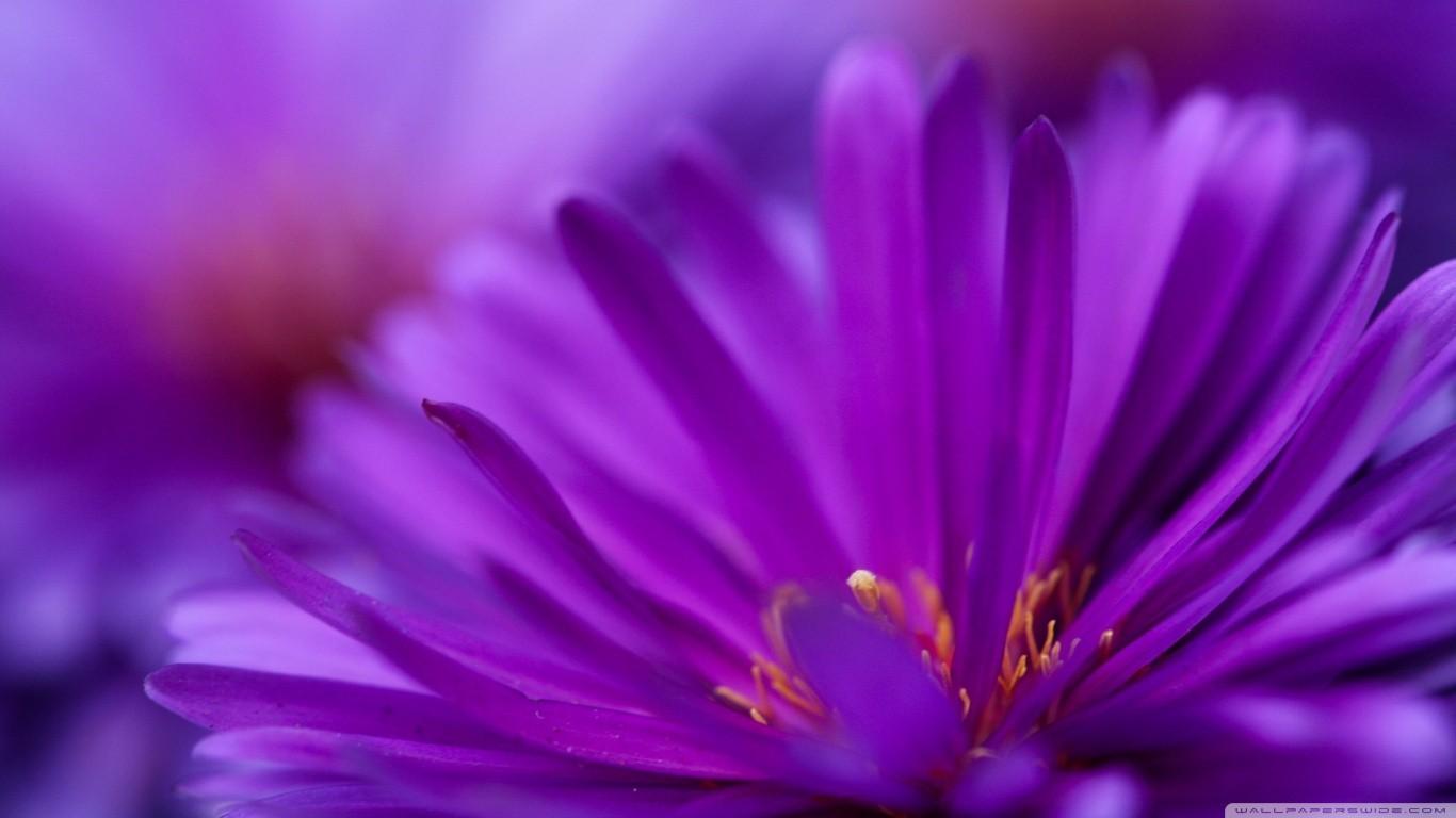 Sfondi Piante Polline Fiorire Fiori Viola Fiore Flora Petalo