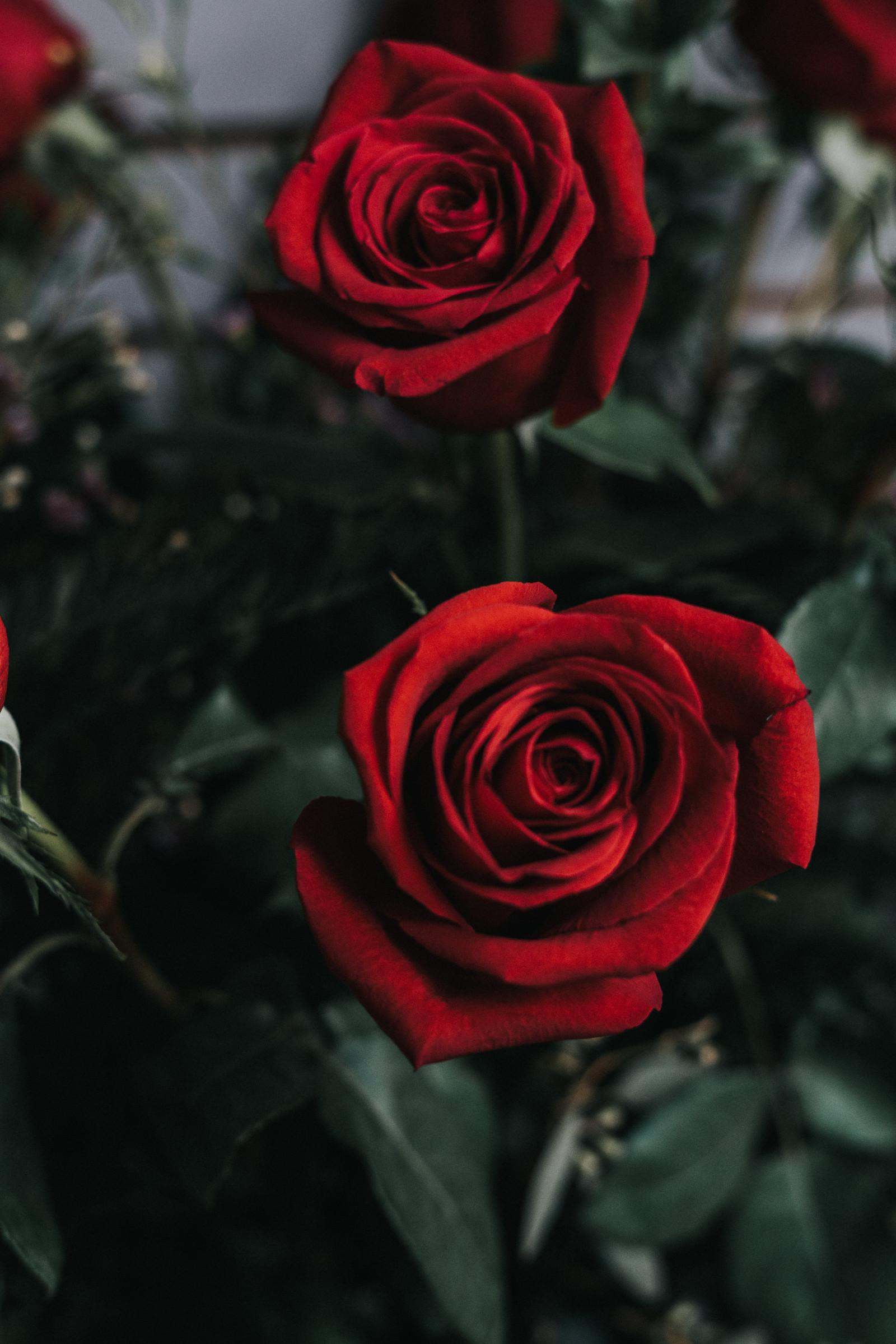 Розы картинки на телефон, стоит открытки