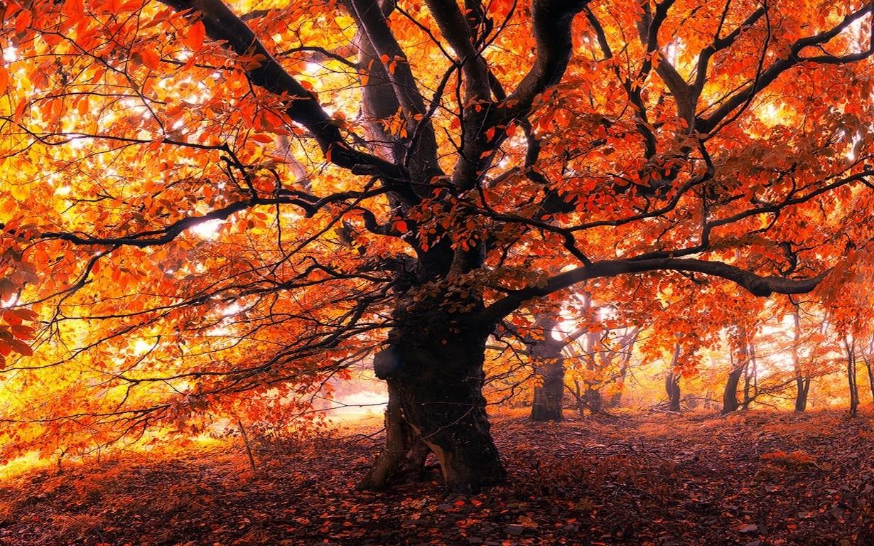 11 >> Hintergrundbilder : Sonnenlicht, Bäume, Landschaft, Wald, fallen, Blätter, Natur, rot, Ast, Gelb ...