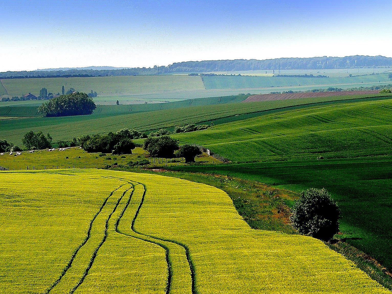 fond d 39 cran france vert jaune jaune fa on paysage campagne agriculture champs des. Black Bedroom Furniture Sets. Home Design Ideas