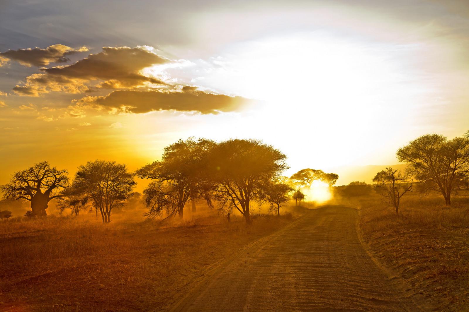 wallpaper   sunlight  trees  landscape  sunset  hill