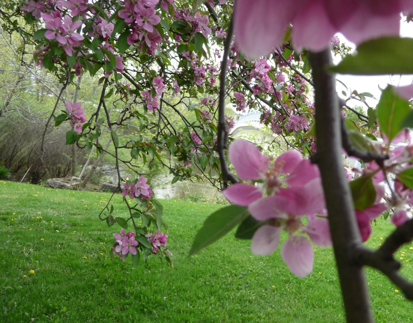 Ingyenes háttérképek   virágok 42d99b94ad
