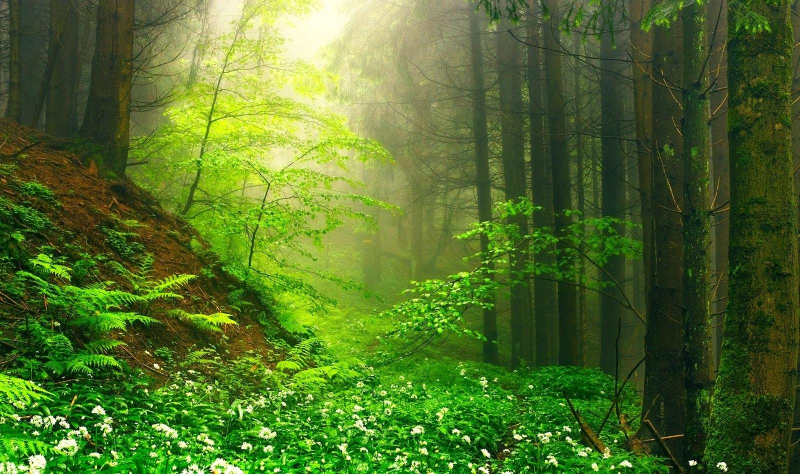 на зеленой полянке фото несколько