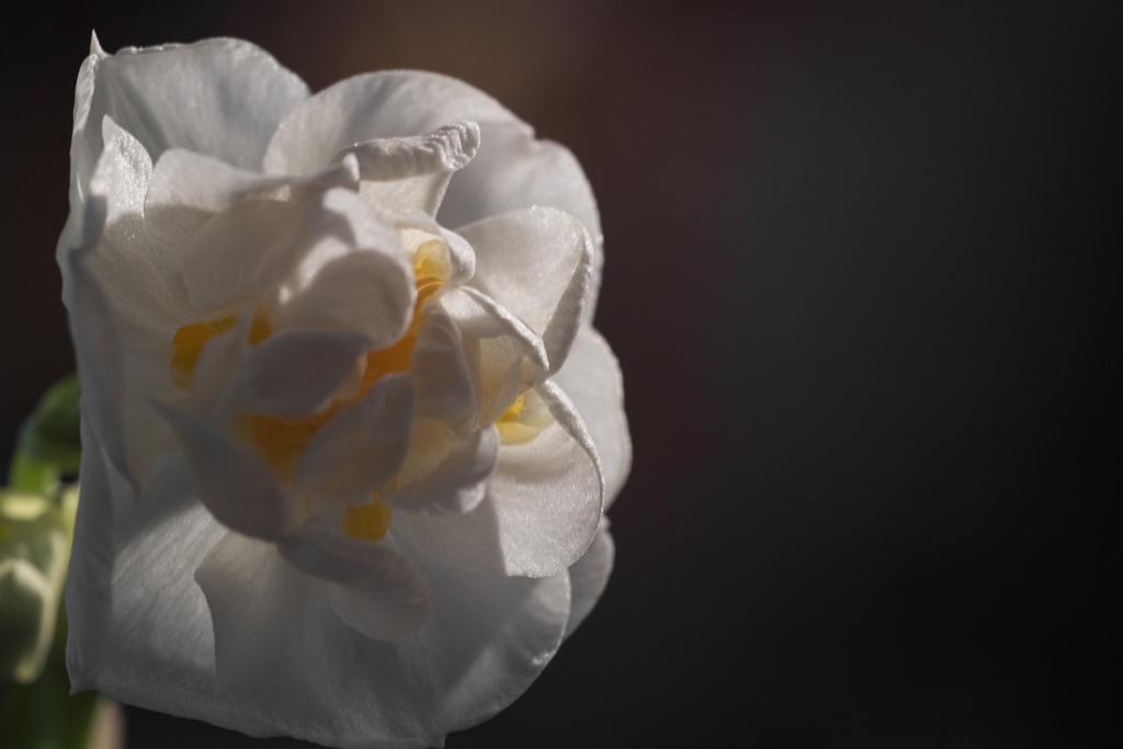 Hintergrundbilder : Weiß, Makro, Deutschland, blühen, Frühling ...