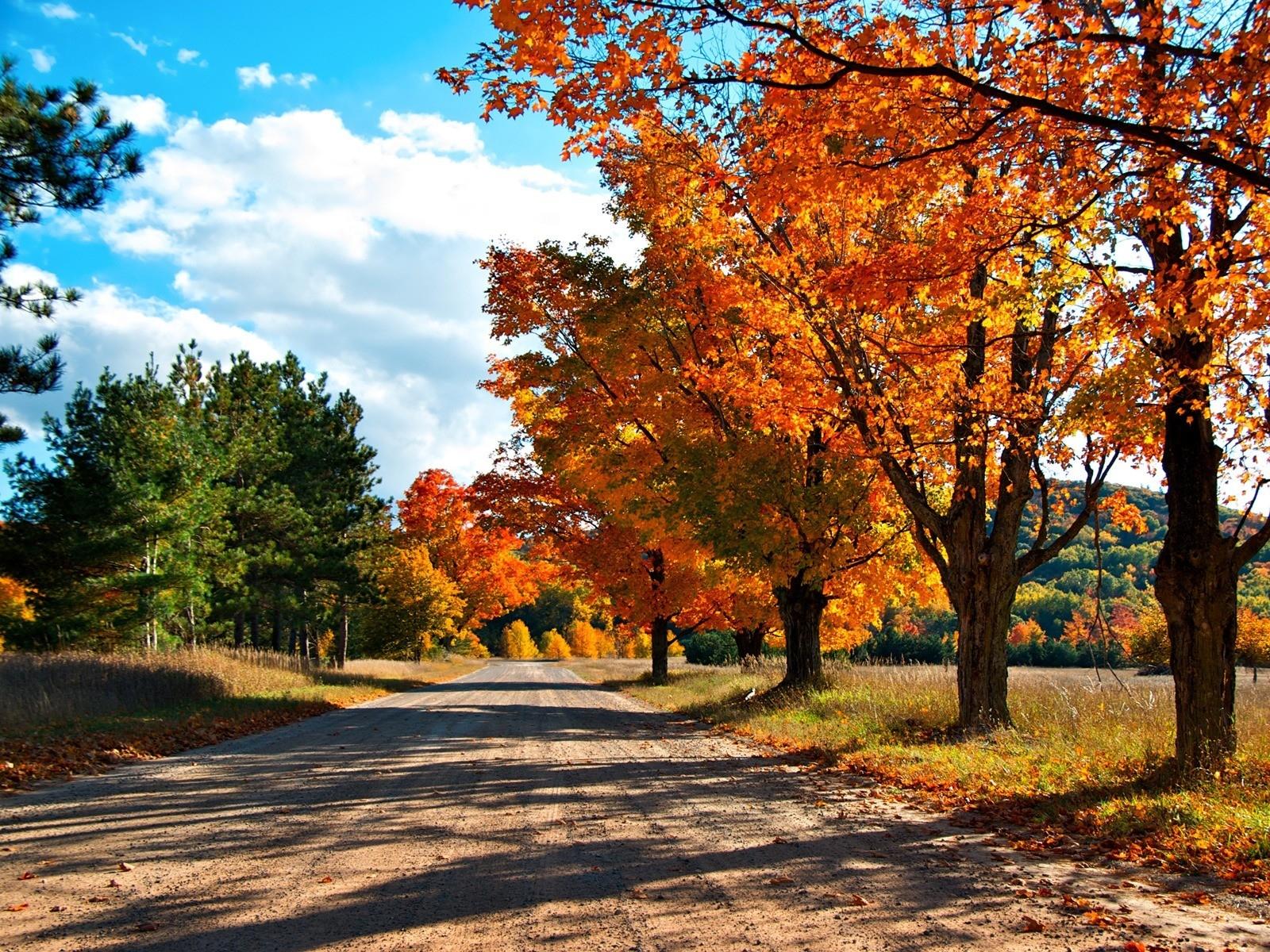Güneş ışığı Ağaçlar Manzara yapraklar doğa Ot gökyüzü alan yol Şube Sarı akşam Yol Bahar Gölgeler Ağaç sonbahar Yaprak bitki Ormanlık alan Koruluk Bilgisayarın duvar kağıdı Odunsu bitki Ilıman geniş yapraklı ve karışık orman yaprak döken akçaağaç