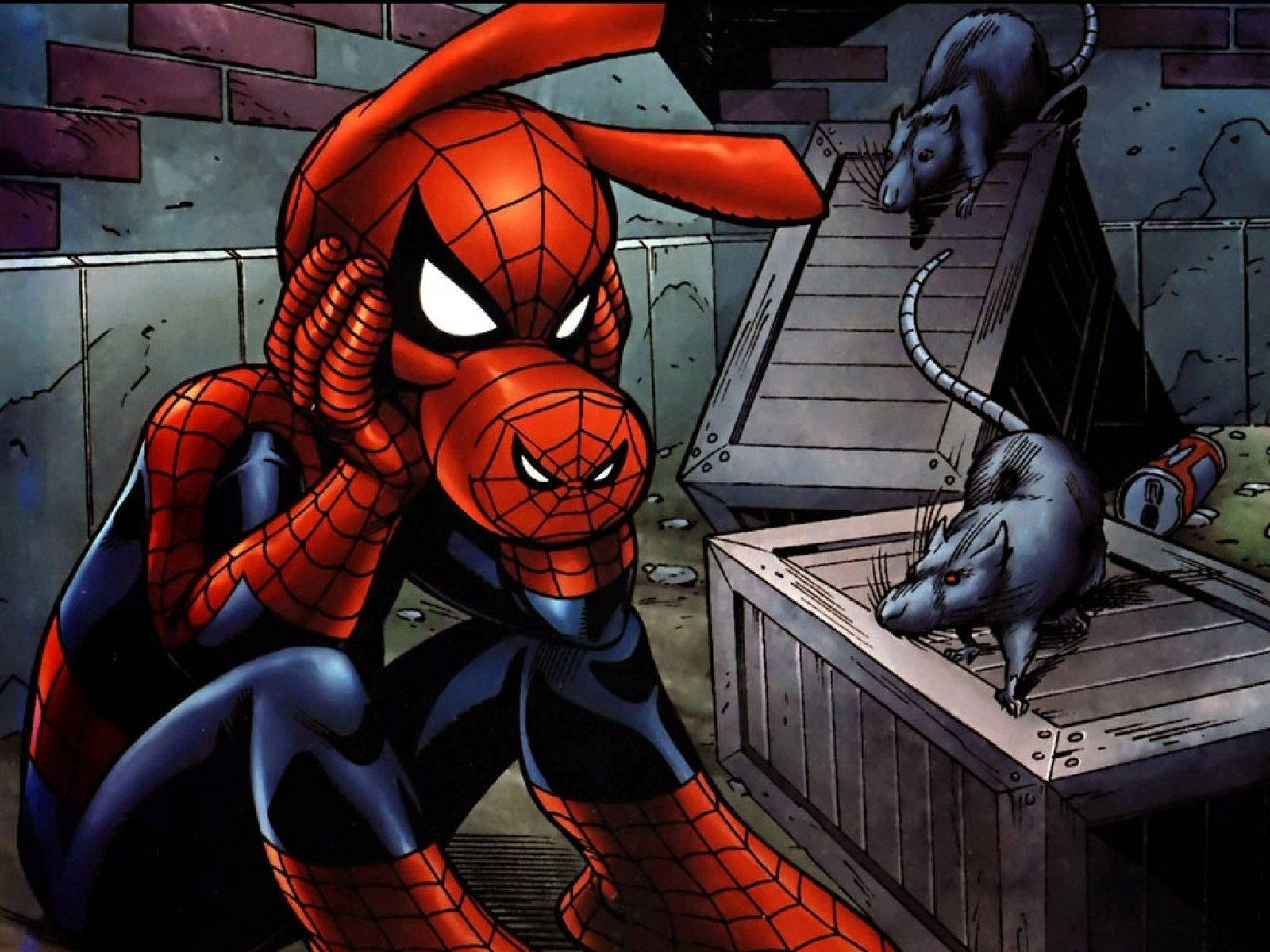 часть картинка свина паука руководителей администрации алушты