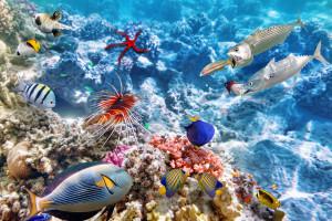 hintergrundbilder : sport, meer, unterwasser, felsen, schwimmen, surfen, ozean, riff, windwelle