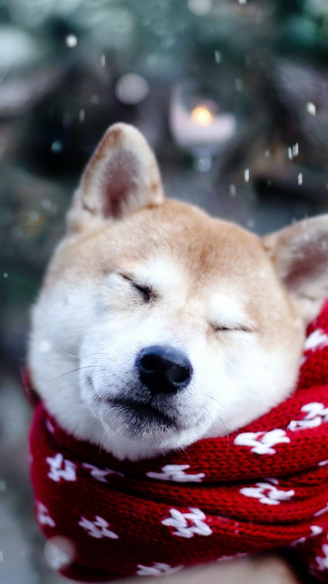 デスクトップ壁紙 雪 冬 柴犬 子犬 脊椎動物 1080x1920 Px
