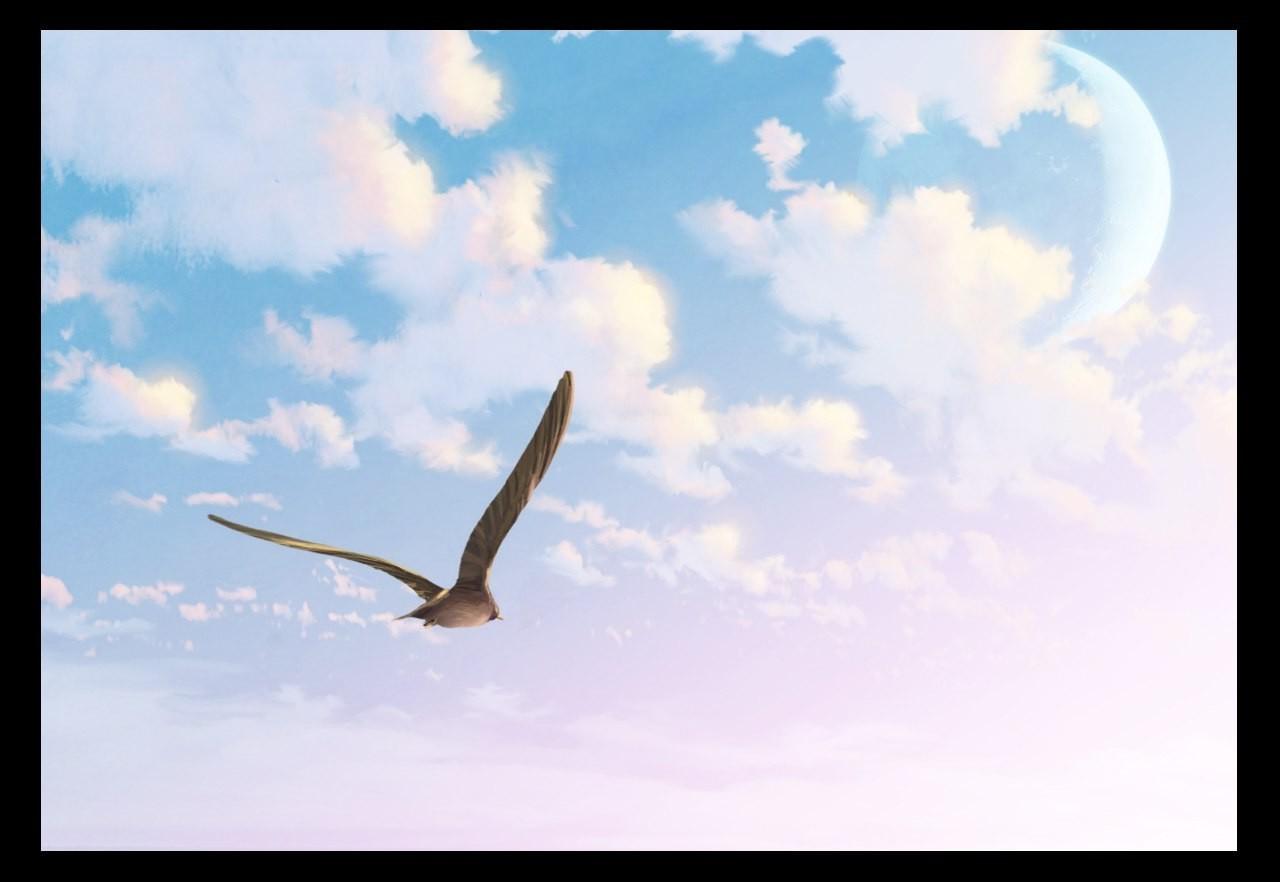 этом картинки летать в небе как птицы загородный дом