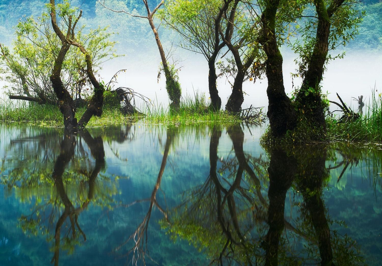 Wallpaper Sinar Matahari Pohon Pemandangan Hutan Danau