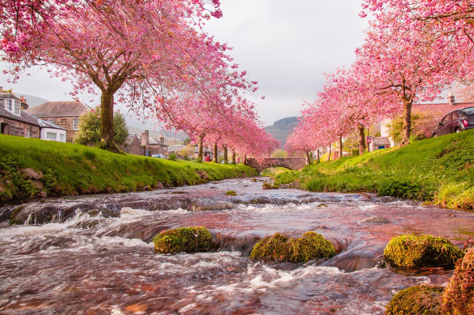 Fond d'écran : jardin, parc, pont, rivière, fleur de ...