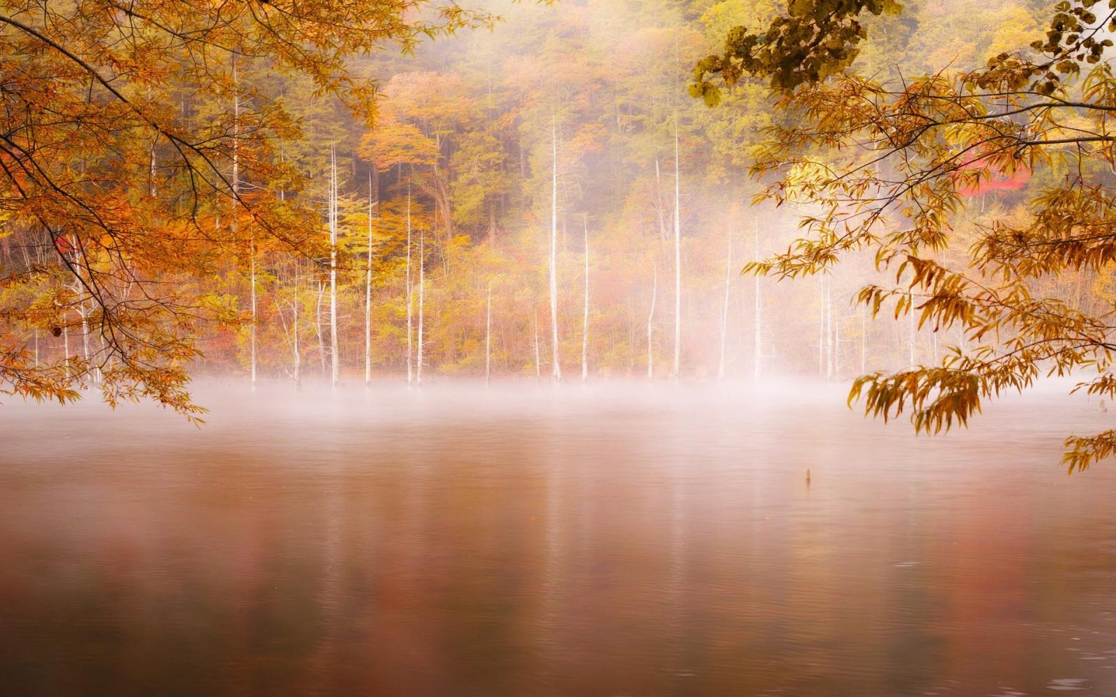 Юбилей, осеннее утро в лесу картинки