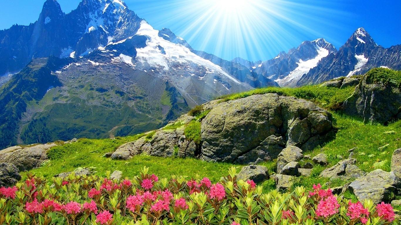 sfondi 1366x768 px fiori montagna 1366x768