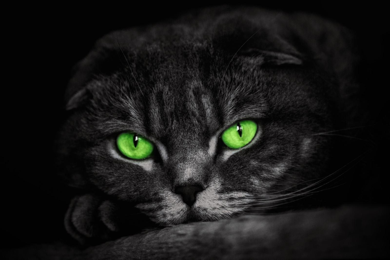 обои на рабочий стол черная кошка с зелеными глазами № 174231 бесплатно