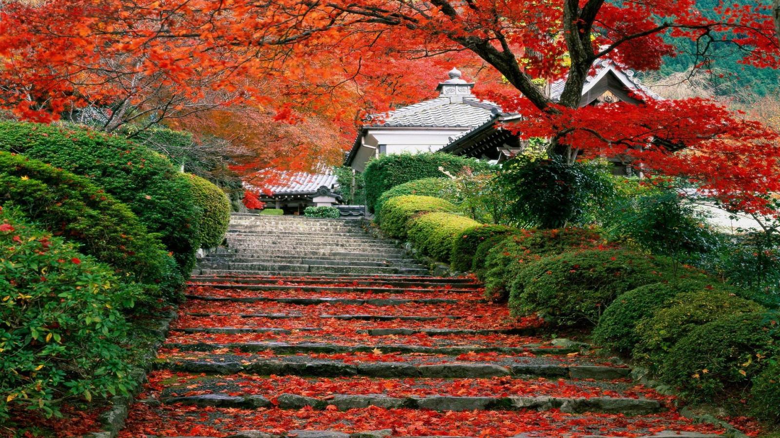 石畳と紅葉の日本の景色の壁紙