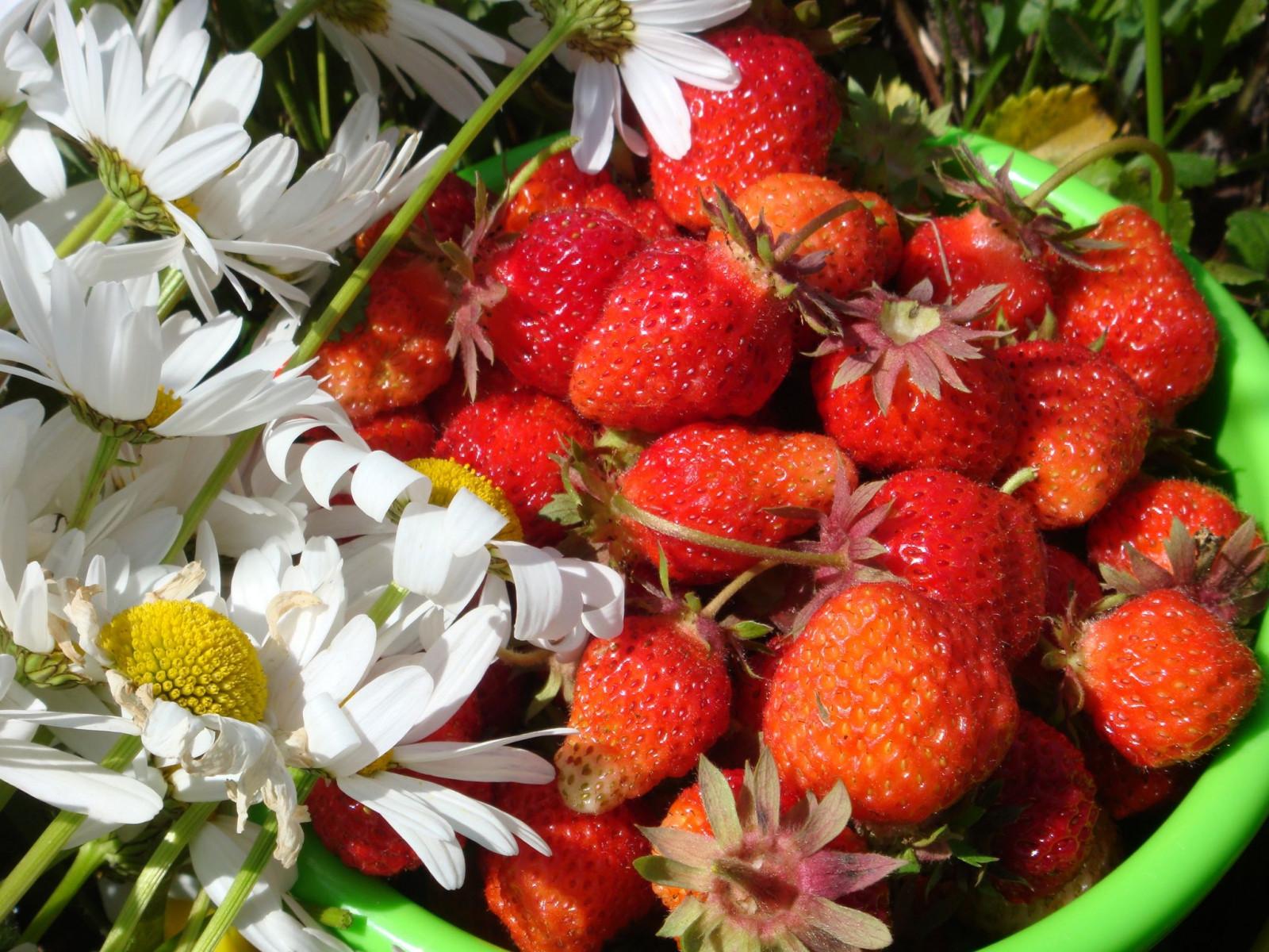 Картинки цветов и фруктов ягод, месяц
