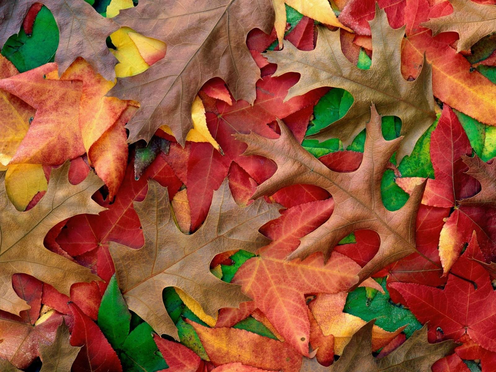 деревенского красивые картинки разных листьев группы