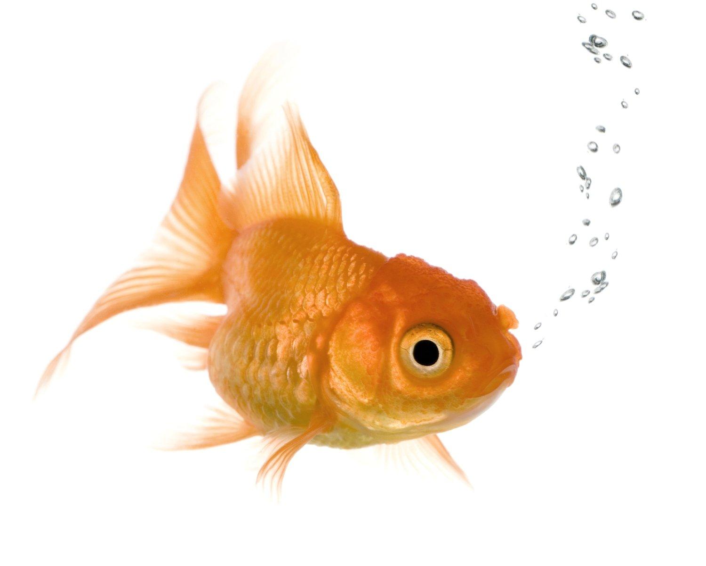 рыбки для аквариума картинки на белом фоне визиты пластическому